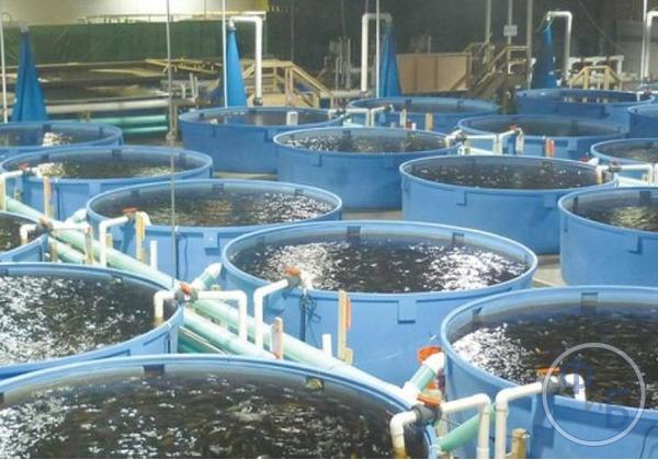 Бассейны для рыбы