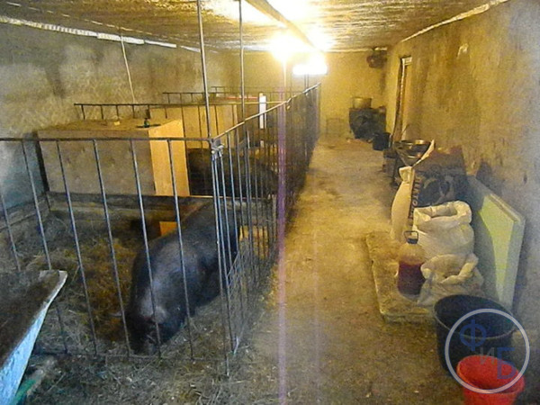 Свинарник в небольшом помещении